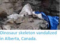 http://sciencythoughts.blogspot.co.uk/2012/07/dinosaur-skeleton-vandalized-in-alberta.html