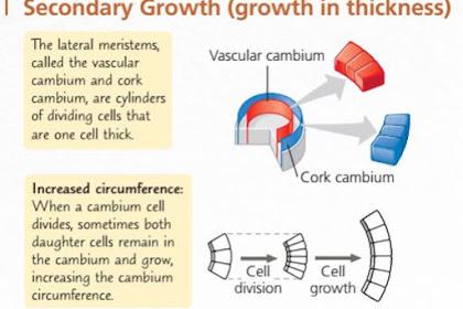 Pertumbuhan Sekunder dan Pembentukan Lingkaran Tahun pada Tumbuhan