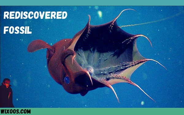 Vampire squid fossil turns out to be a 30 million year old