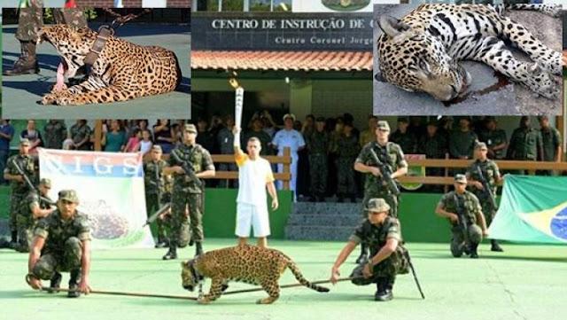 جندي يقتل نمرا خلال عرض بالشعلة الأولمبية في البرازيل  شاهد بالصور !!