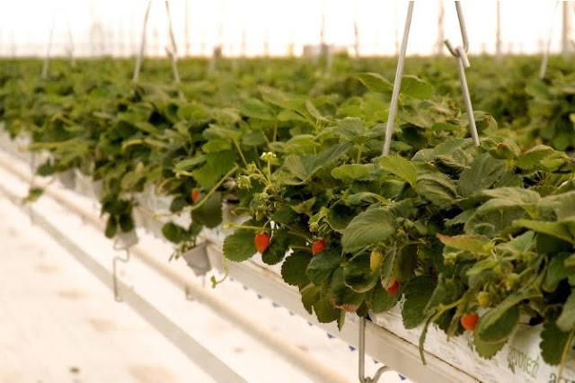 Aumentan exportaciones de productos de invernaderos