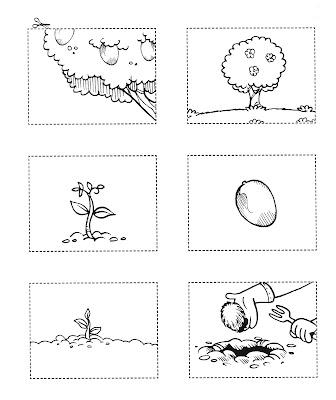 Atividades de Ciências - Plantas - DESENVOLVIMENTO-3