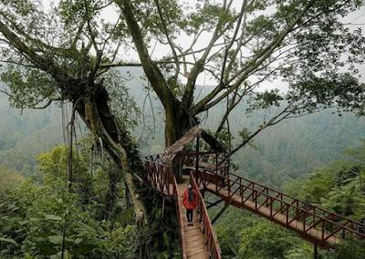 Wisata Unik Rumah Pohon Tombo Jawa Tengah