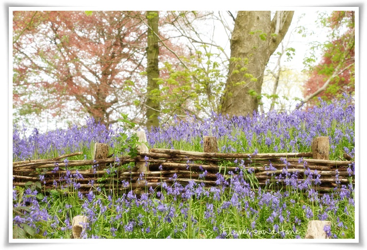 flowers and home: Springtime magic in the forest