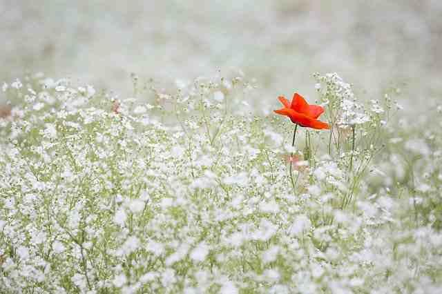 The Irresponsible Flower Waterer