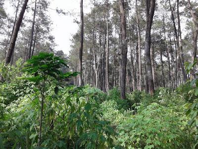 jaga hutan dengan adopsi hutan