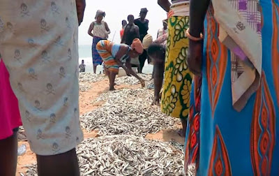 Fresh caught fish on the beach in Togo Africa