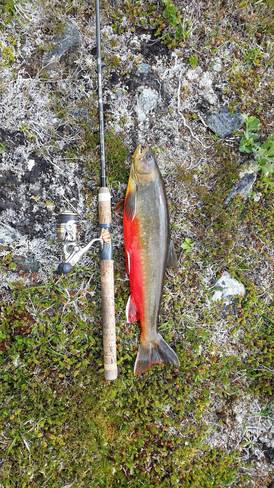 Huvudingen fiskelycka