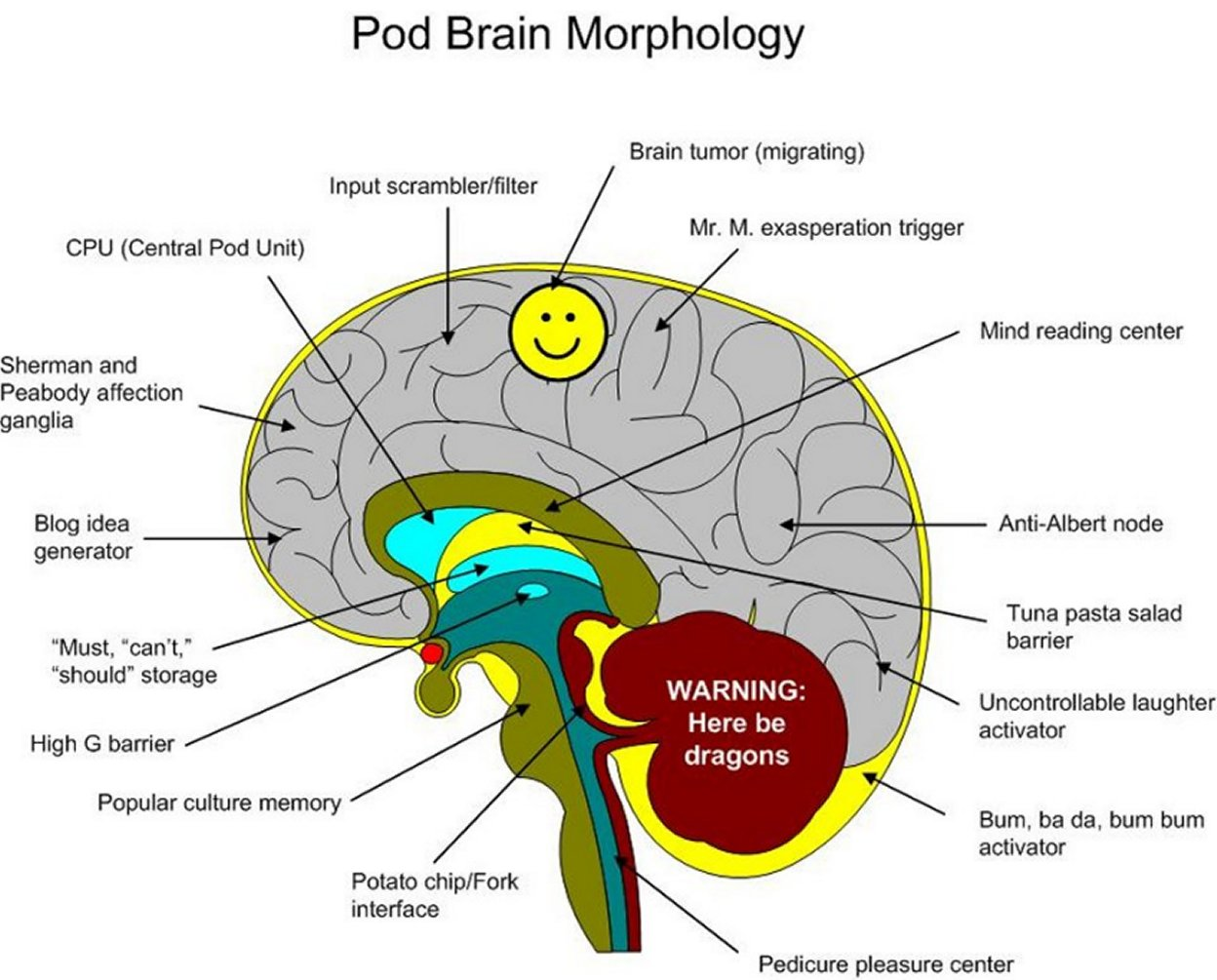 Human Brain Labeled Diagram