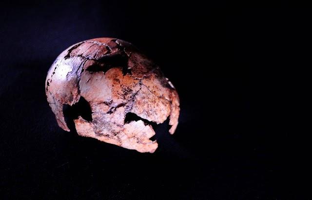 Hallados en Sudáfrica los fósiles más antiguos de 'Homo erectus'