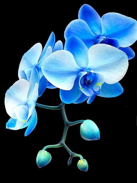 Flores e Cores Orquídea