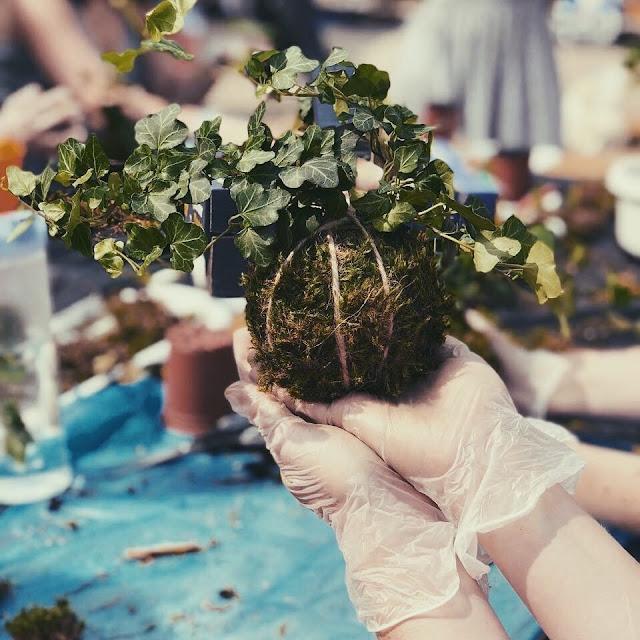 Warsztaty wiszące kule roślinne.Girly Stuff Events