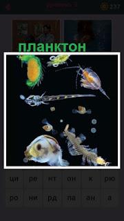 655 слов в воде плавают несколько планктонов 3 уровень
