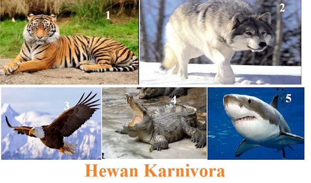 Contoh Hewan (Binatang) Karnivora dan Penjelasannya