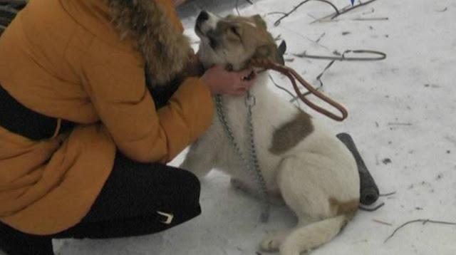 Собаку откармливали на шашлык, но ее удалось вытащить из рук изверга