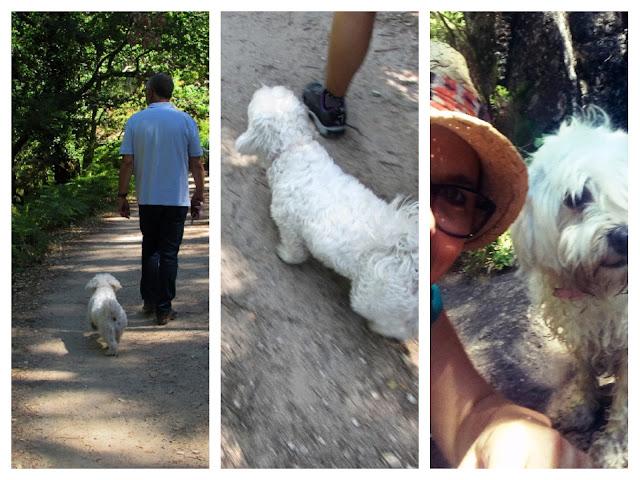 cão com senhor e passeando