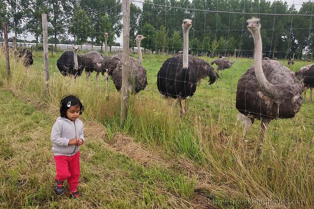 't Struisvogelnest Petting Zoo Animal Farm Brussels