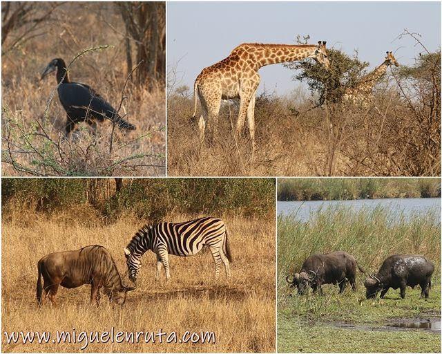 Safari-Kruger-fauna-Lower-Sabie