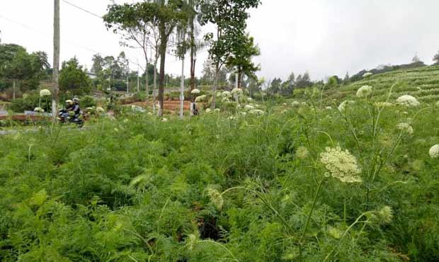 Zaman Majapahit, Batu Malang Desa Agraris Otonom - Sejarah Batu Malang (8)