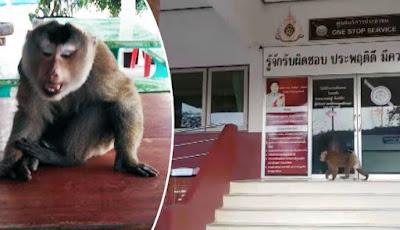 Gambar monyet yang ditangkap oleh polisi.