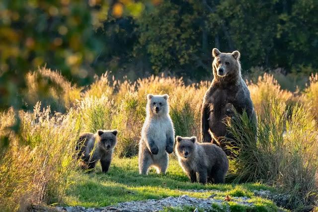 The best Tourist Attractions in KodiaK, Alaska