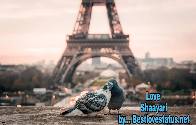 Best Top Love Shayari-Love Shayari in Hindi