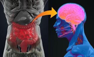 microbiota e o cérebro