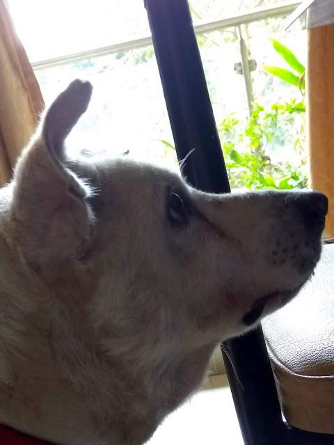 bozo, dog, pet, pet pride, pets always, pets forever, patience,