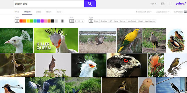 Yahoo Image Search: Most Popular Images Search Engines: eAskme