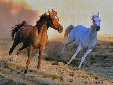 قصة قرية الخيول
