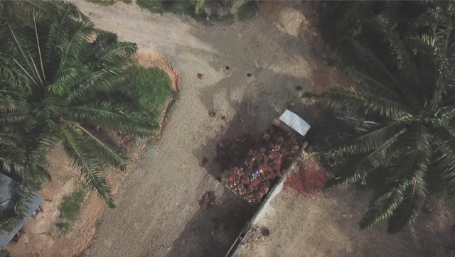 Palm oil workers during covid-19 pandemic in Indonesia and Malaysia