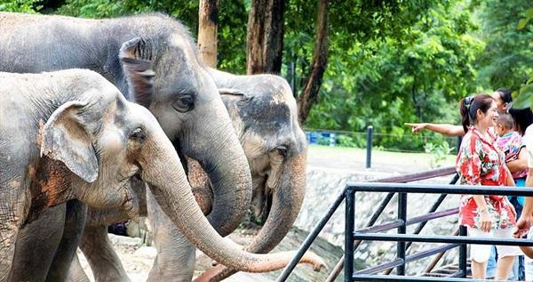 động vật hoang dã tại Khao Kheow