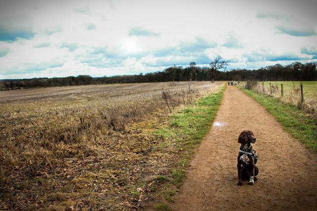 Blickling Estate National Trust Dog Friendly