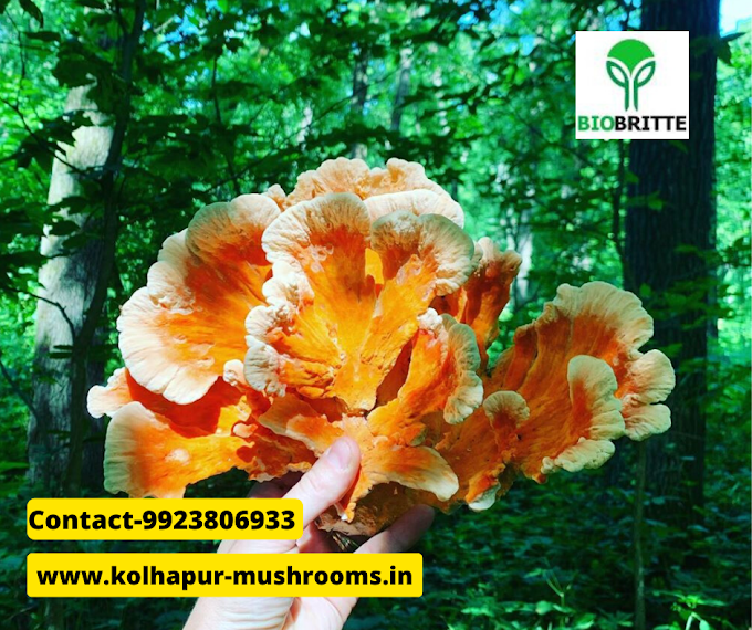 What are the equipment required for mushroom cultivation?