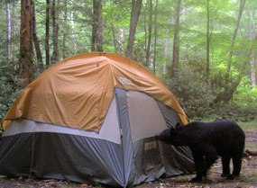 U.S. Forest Service issues warning about Black Bears in Panthertown