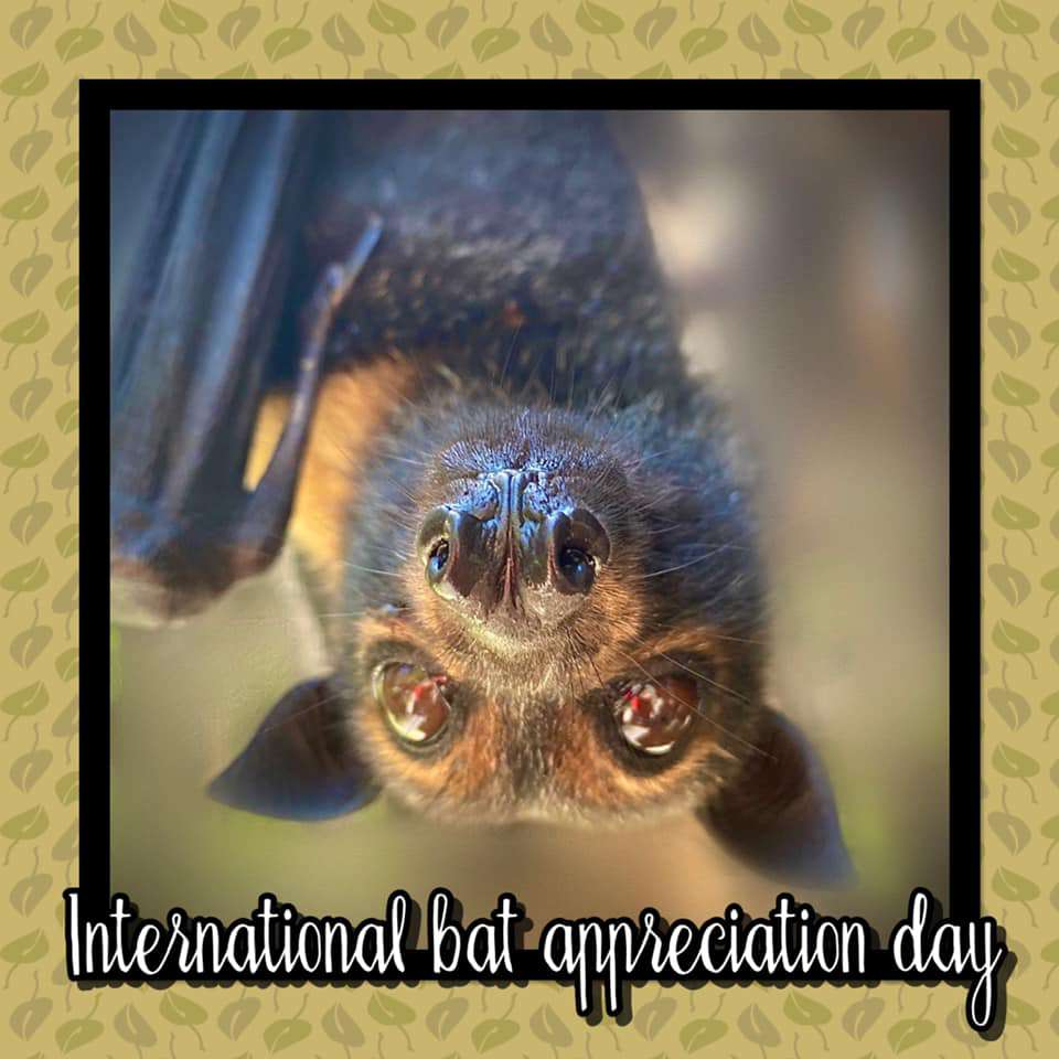 International Bat Appreciation Day Wishes for Whatsapp