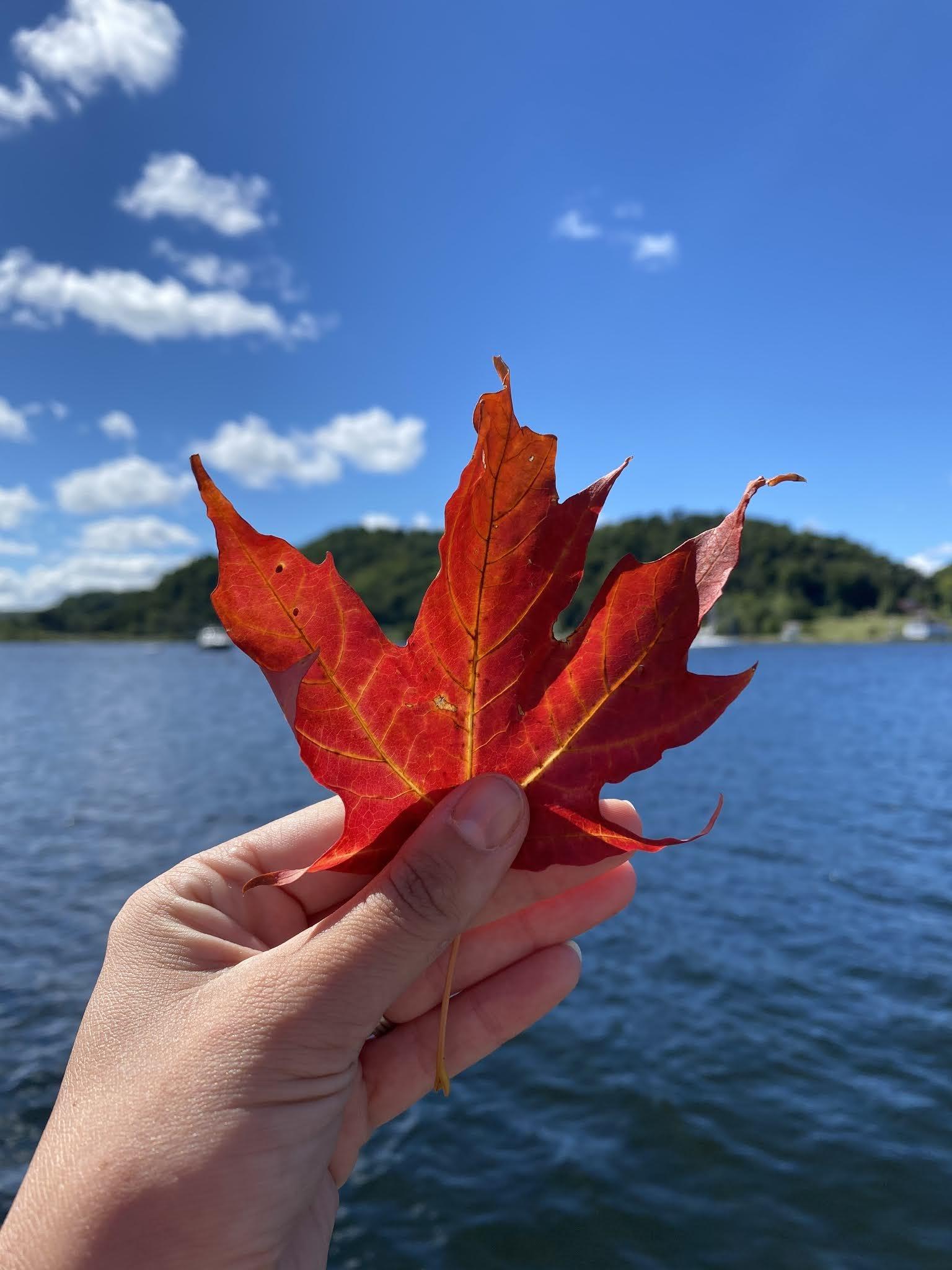 First Fall Leaf, Frankfort MI | biblio-style.com