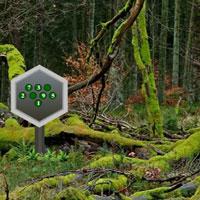 WowEscape-Parky Forest Escape