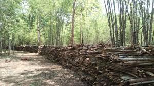 आदिवासी जमीन हस्तांतरण प्रकरणी अनुसूचित आयोगाने बजावली नोटीस
