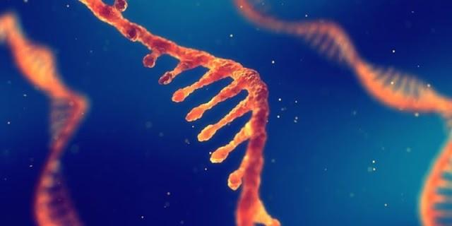 أنواع الحمض النووي
