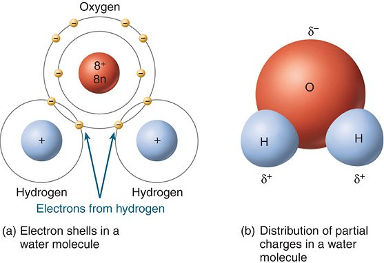 how many hydrogen atoms are in water