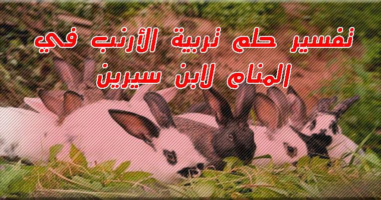 تفسير حلم تربية الارانب في المنزل للرجل والمرأة .. تعرف على تفسير رؤية الأرانب المذبوحة في المنام