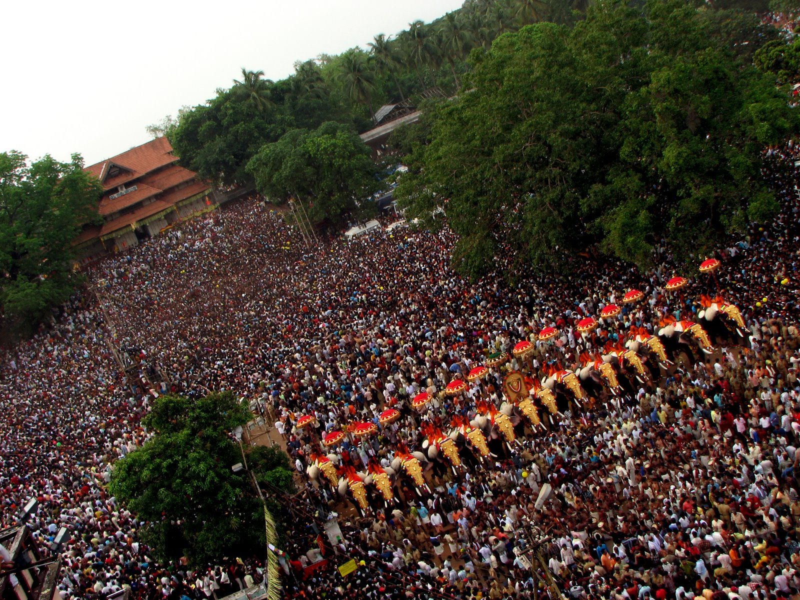 thrissur pooram elephants images wallpapers