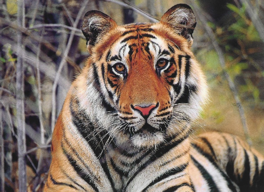 Give Animals a Voice: Endangered Animals of Asia