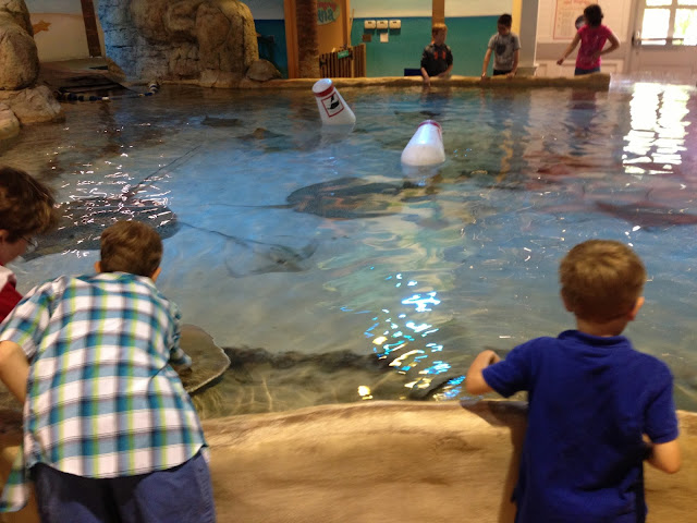 Touch the Sting Rays at Adventure Aquarium in Camden, NJ