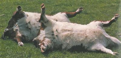 Early diagnosis of Tetanus toxemia in Animals