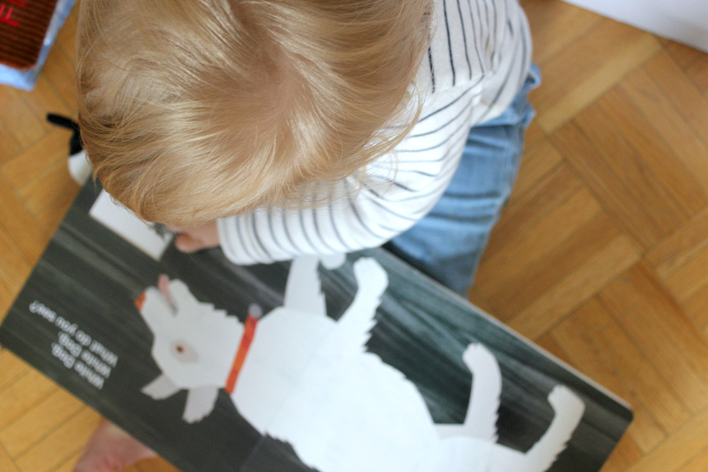 Ways to Help Foster Your Child's Love for Animals
