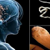 Avoid Consuming This Food This Will Results Of Having Worms In Your Brain