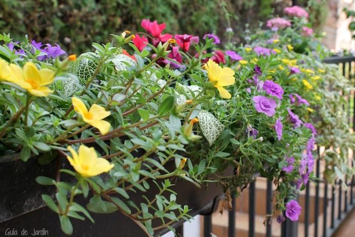 flores en jardineras de balcón