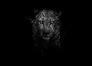 Leopard - Photo by Geran de Klerk on Unsplash